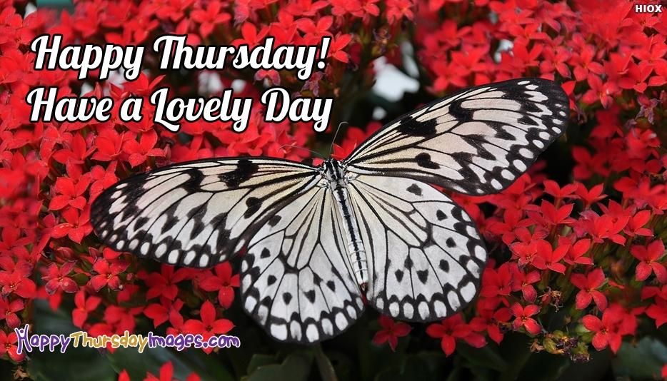 Happy Thursday Butterfly - Happy Thursday! Have A Lovely Day