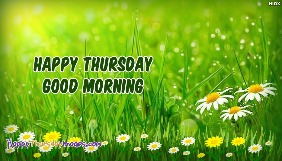 Happy Thursday Good Morning - Good Morning Happy Thursday Images