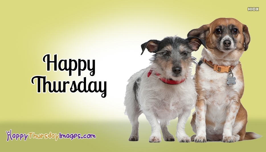 Happy Thursday Pets Images
