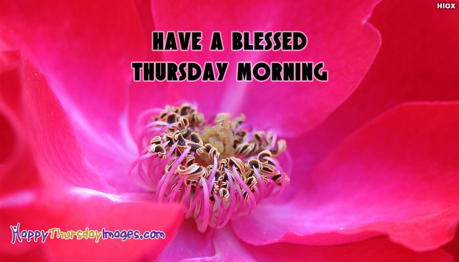 Have A Blessed Thursday Morning - Happy Thursday Images for Whatsapp