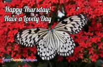 Happy Thursday Greetings