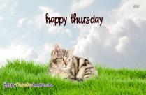 Happy Thursday Cat
