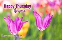 Happy Thursday Gorgeous Image