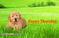 Happy Thursday Puppy